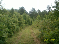 53.68 Acres, Rover, AR 72860